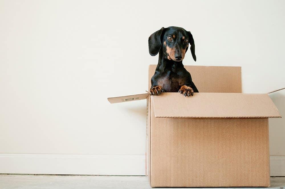 razas de perros calor -vidaenyucatan.com