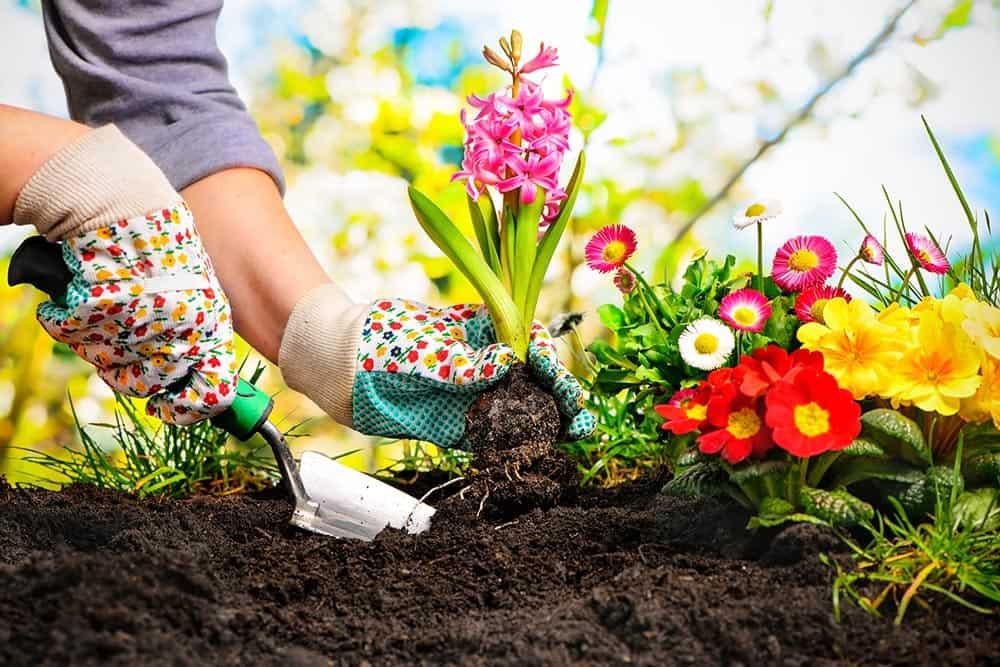 5 claves para el jardín si vas a vivir en Mérida